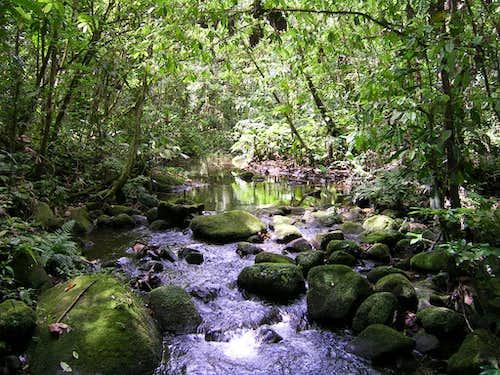 Inside the jungle