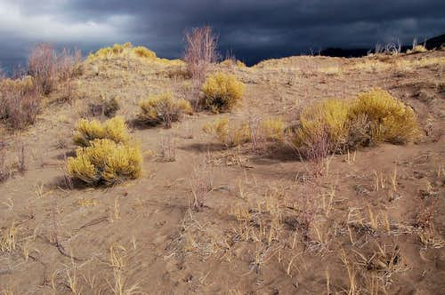 Rabbit brush on the sand beneath Storm Clouds