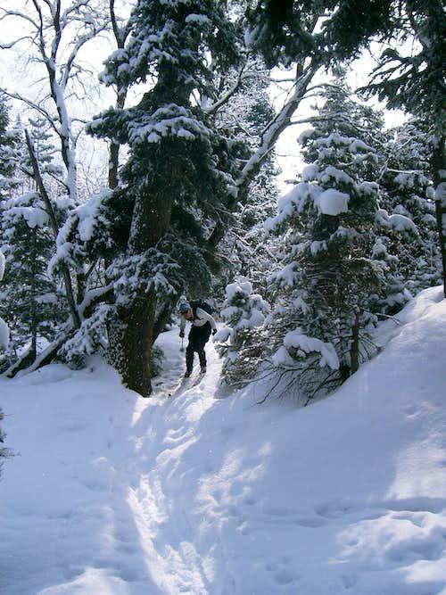Freeze Creek trail