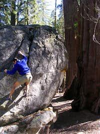 Sherman Tree Boulders