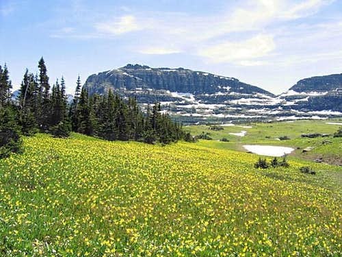 Heavy Runner Mountain & Glacier Lilies