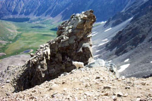 Mountain Goat on Gray's Peak