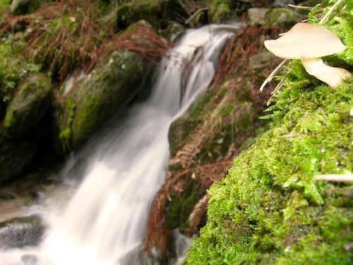 Mushroom and cascade