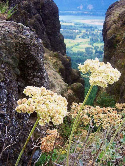 Hamilton Mountain Wildflowers