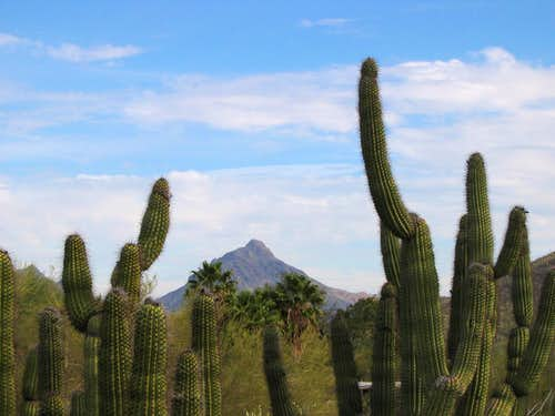 The Tucson Mountains