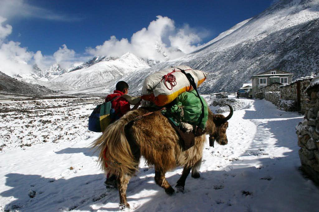 Leaving Periche towards Dughla