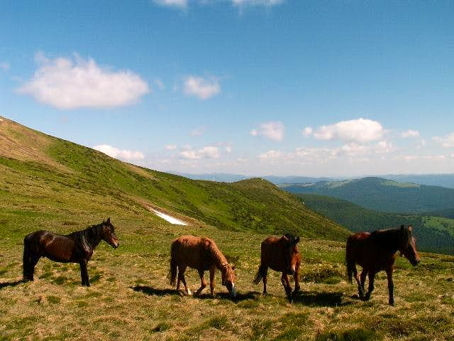 Horses on main ridge