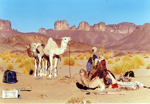 Camp and camels