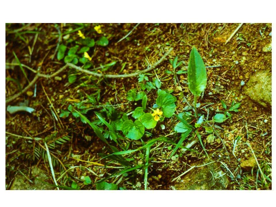 A plant from Karkonosze...