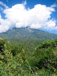 Macro View of the Tacana
