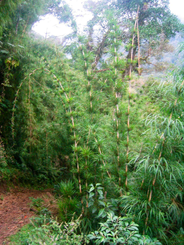 Lower Level Vegetation