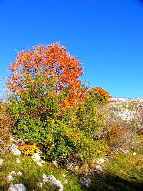 Svilaja - Autumn.