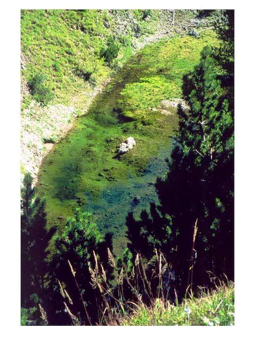 Green pond...