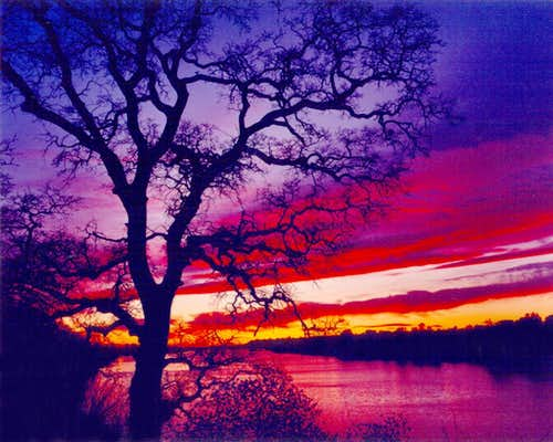 Blue Oak Sunset