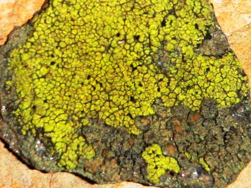 Lichens from...