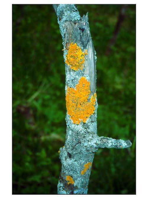 Mountain pioneers - algae, fungi, lichens et al.