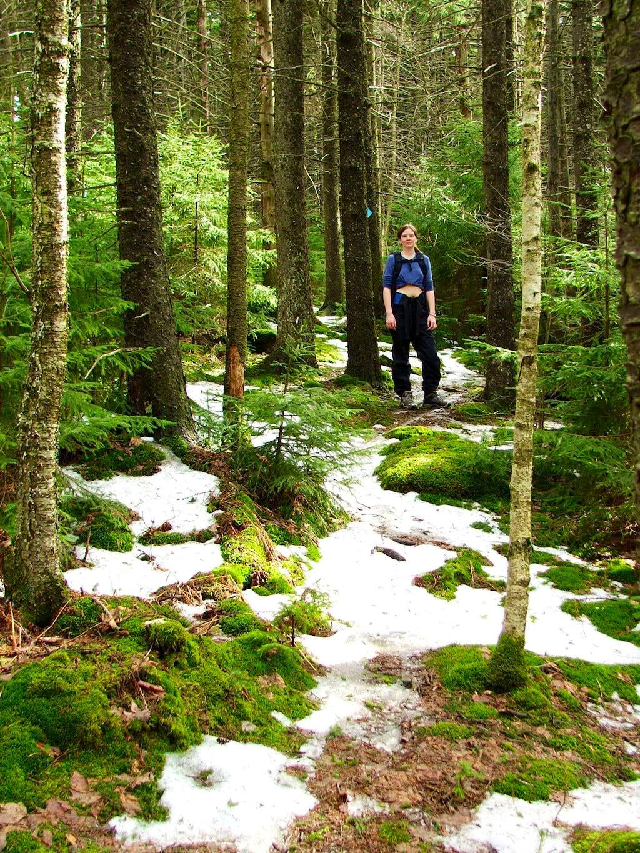 Hiking Red Spruce Knob Trail