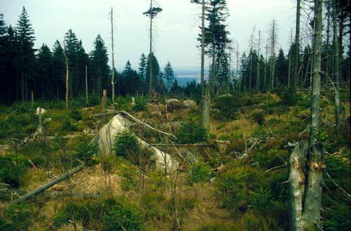 Waldsterben (forest decline)