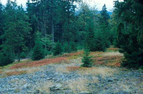 granite rock slope in fall