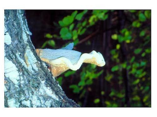 Mushroom on...