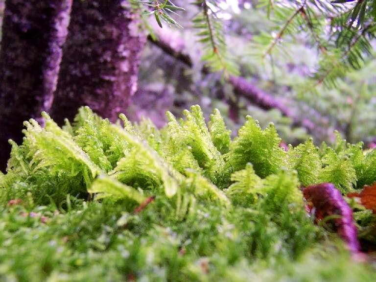 Mini Ferns
