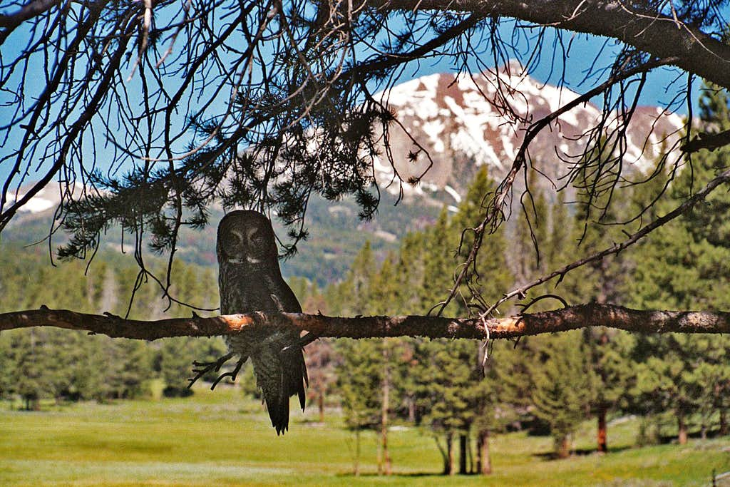 Owl and Electric Peak