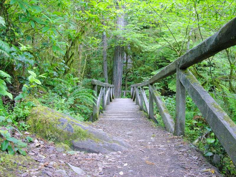 Redwoods National & State Parks