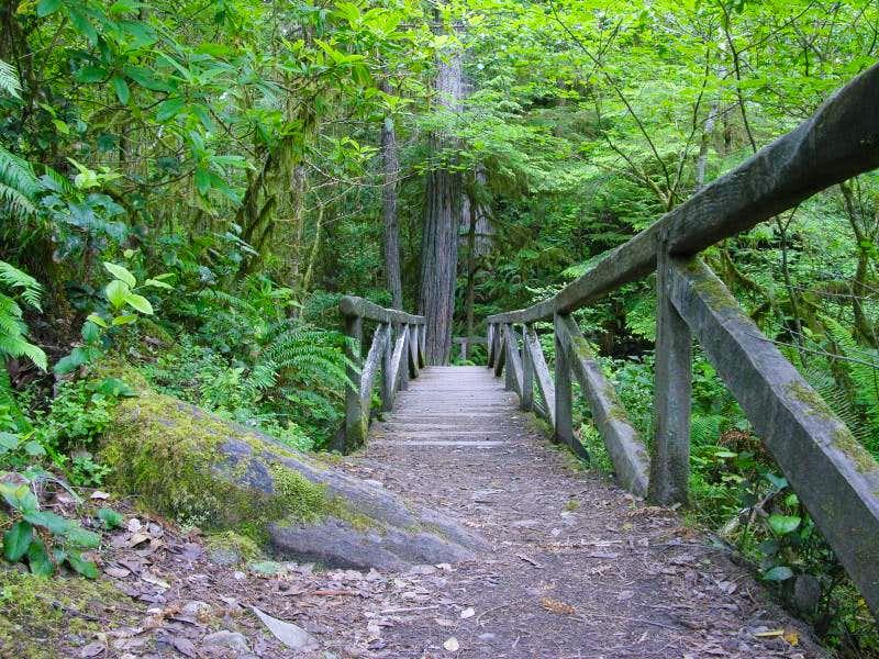 Bridge Across the Creek, Stout Grove Redwoods