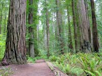 Stout Grove Redwoods
