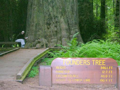 Founders Grove Redwoods