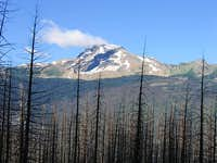 Heavens Peak, Burnt Trees