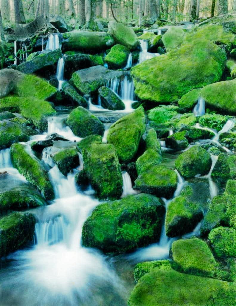 Mossy Stream