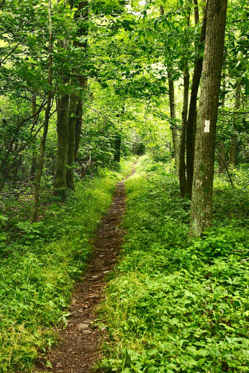 Appalachian Trail in Shenandoah