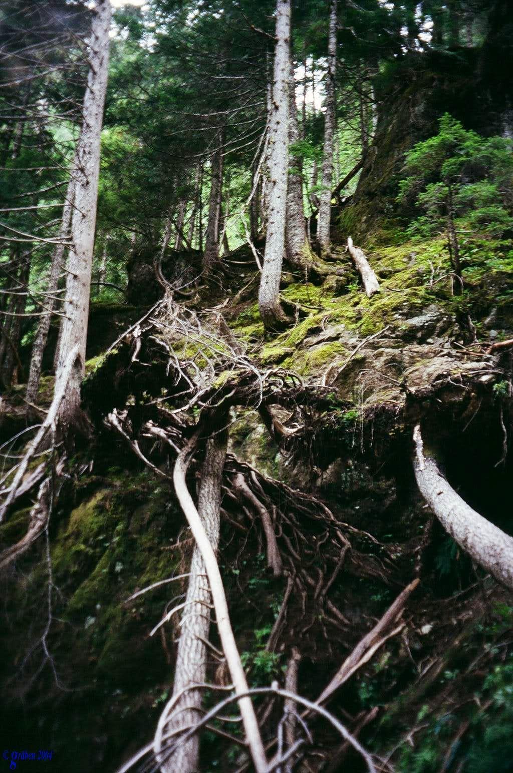 Elkhorn approach trail