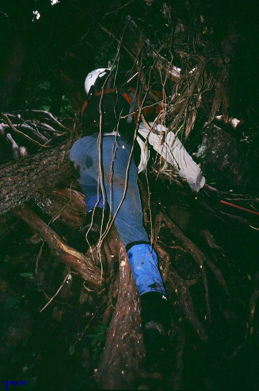 Climbing a tree chimney