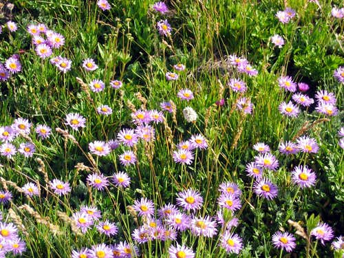 Columbia wildflowers