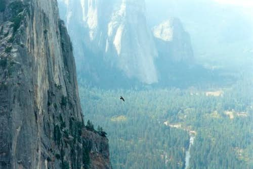 Bird soaring above The...