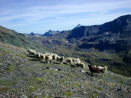 Near the Punta Laval summit (3102 m)