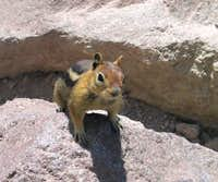 Attack Chipmunk