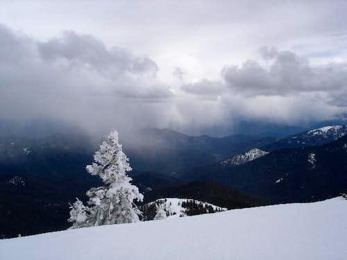 Grayback in Winter