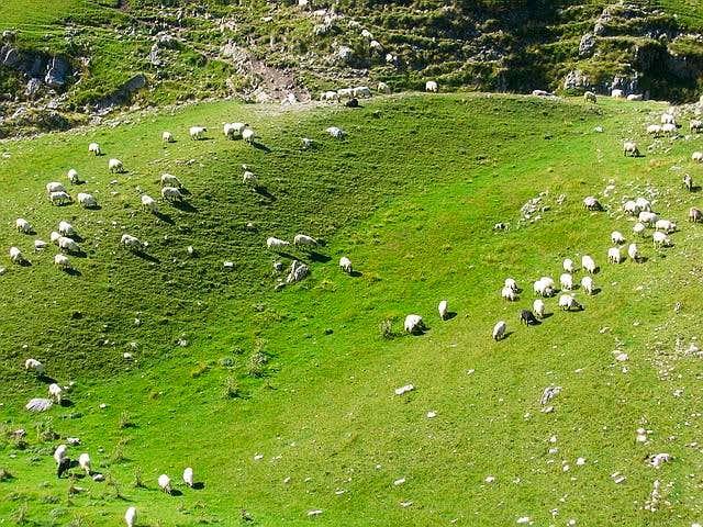 Sheeps in Dobri Do valley