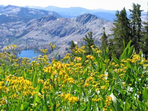 Sierra Wildflowers & Susie Lake, Desolation Wilderness