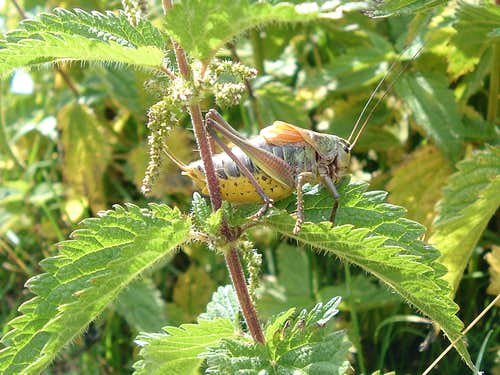 Nettles don\'t sting!