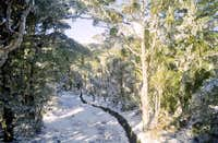Track to the Mt Arthur Hut