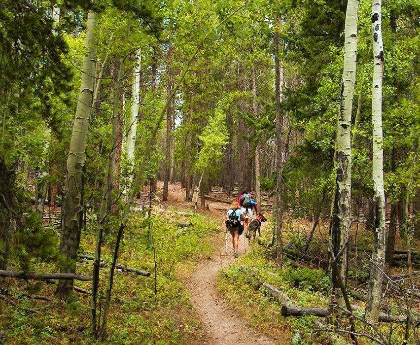 The Main Crosier  Mountain Trail