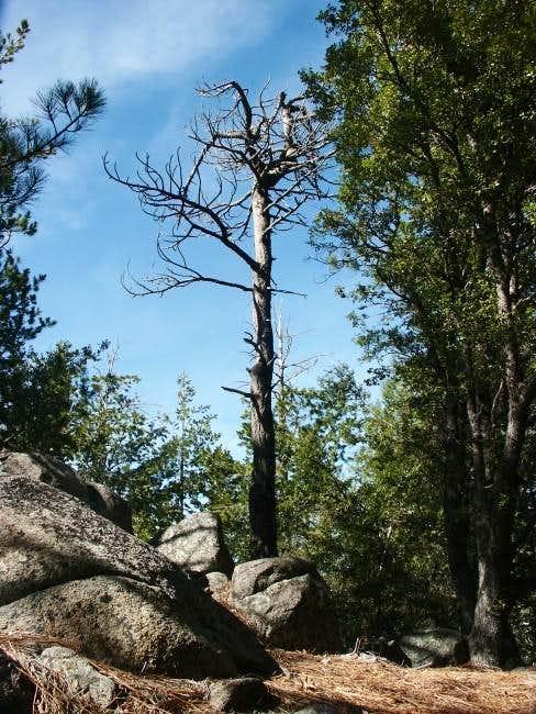 Dead pine tree on the summit...