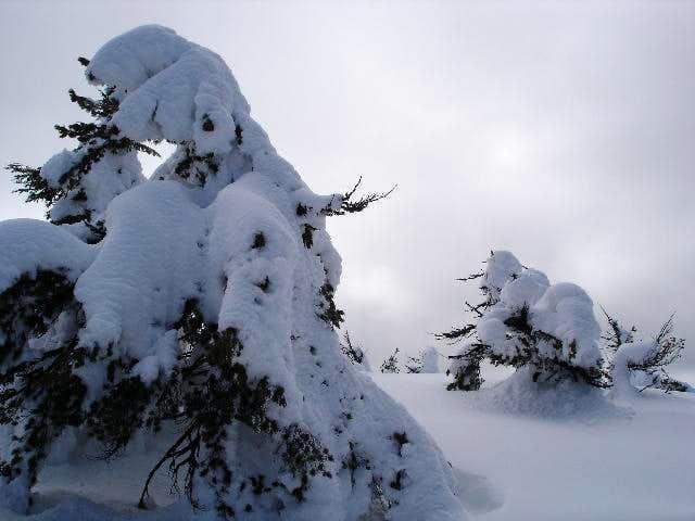 Brown Mountain 4