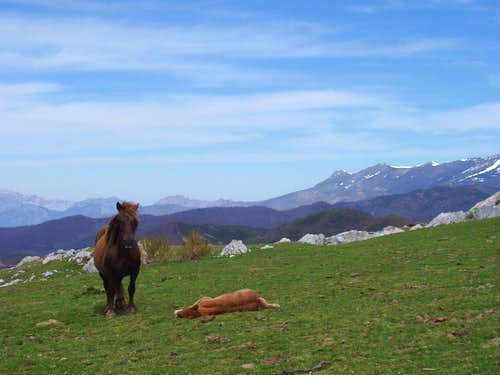 Horses on the lower slopes