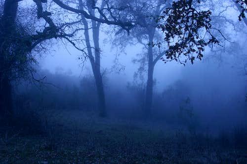 I hate fog now