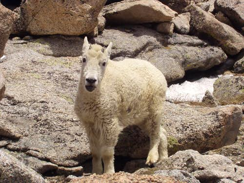 Some company on the way to Mount Evans